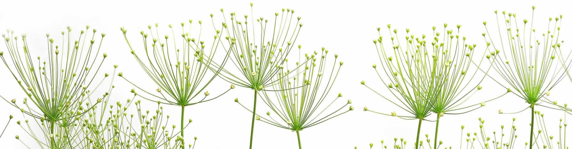 Titelbild Grüne Pflanzen Faktura-XP® Warenwirtschaftssystem